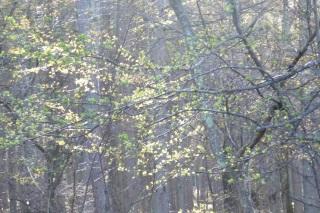 春の朝の青い光